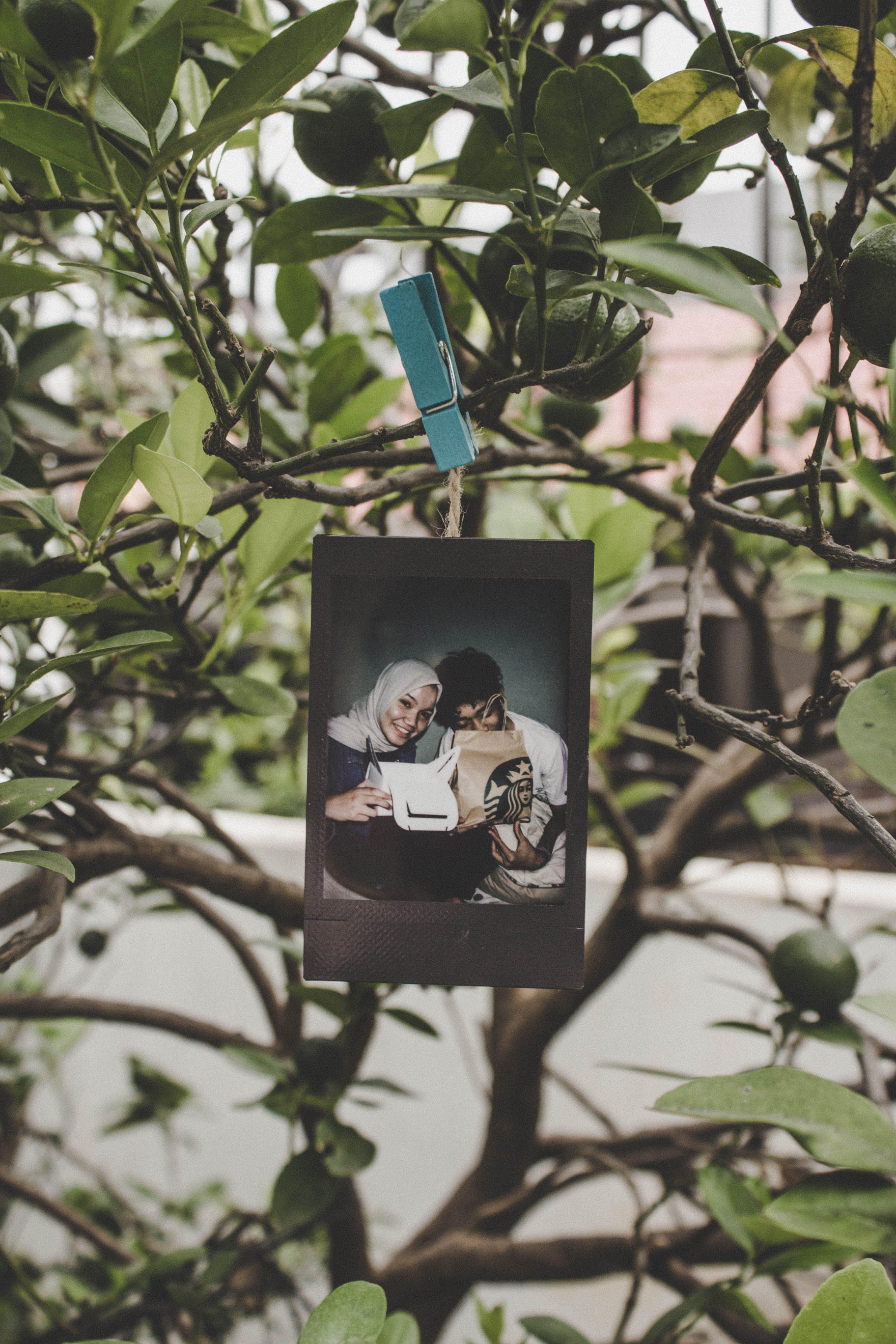 Základová fotografie zdarma na téma denní světlo, focení, krajina, obrázek