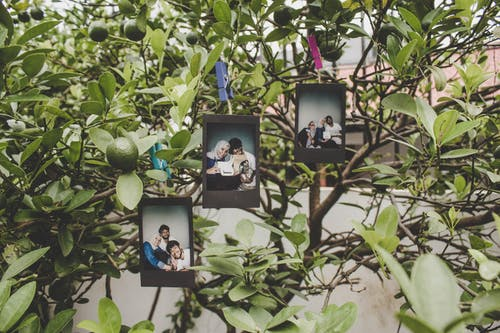 Three Black Wooden Photo Frames Hanged on Tree