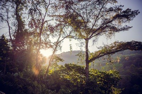 Free stock photo of costa rica, jungle, rainforest