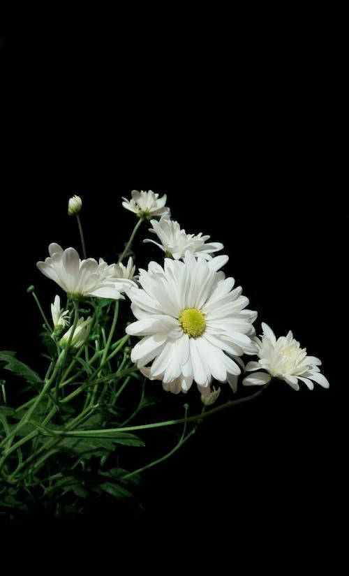 Gratis stockfoto met donker, mooie bloemen, nachtfotografie