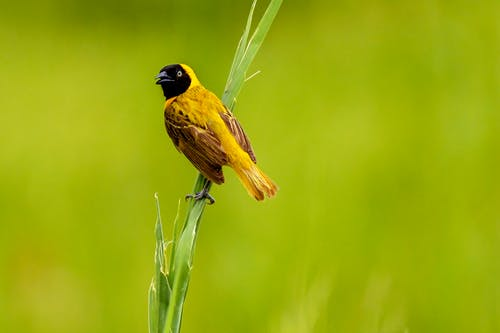 Bird Perched On Grass