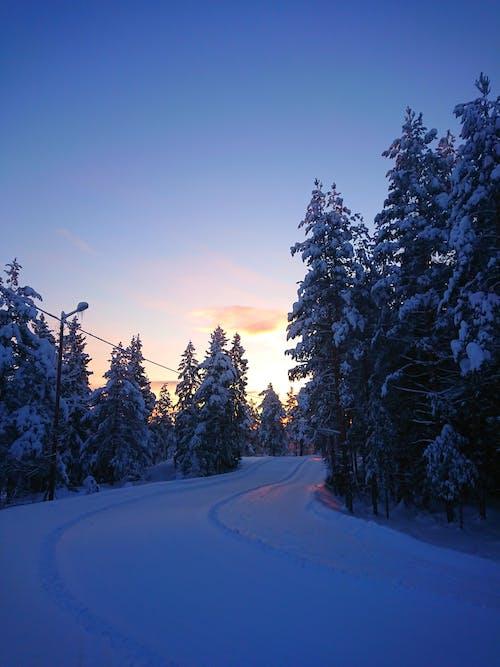 Foto profissional grátis de árvores, clima, com frio, estrada