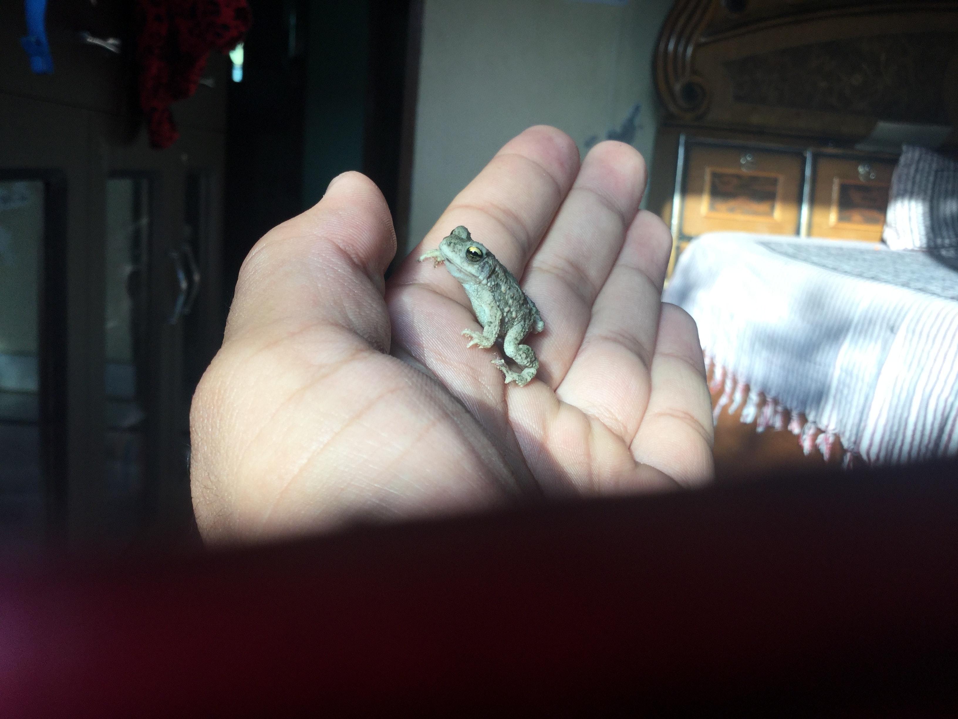 Free stock photo of animal, frog, hand
