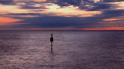 Free stock photo of sunset ocean landscape nature pelican
