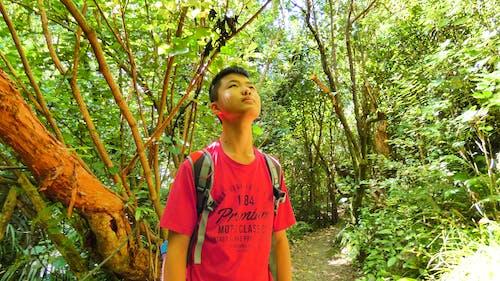 Foto d'estoc gratuïta de adolescent, bosc, caminada, mare naturalesa