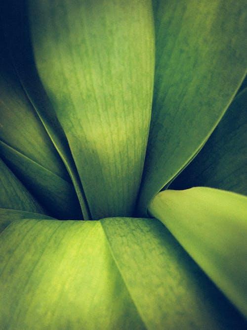 Kostenloses Stock Foto zu blume, farbe, flora, grün