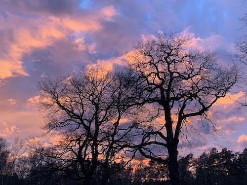 天性, 日落, 樹, 無葉樹 的 免費圖庫相片