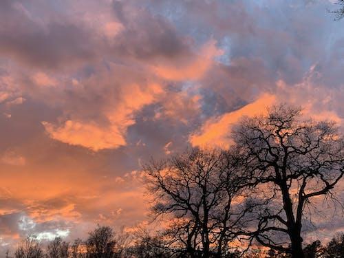 Gratis lagerfoto af leafless tree, natur, rød solnedgang, skyer