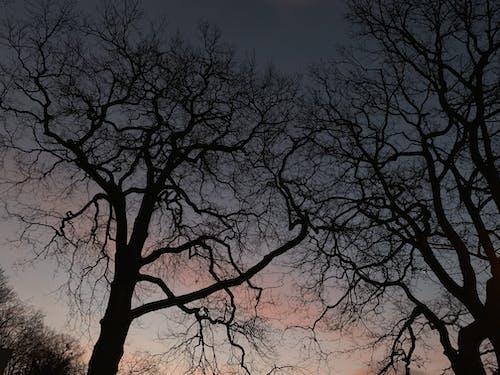 Imagine de stoc gratuită din arbore, arbore fără frunze, noapte