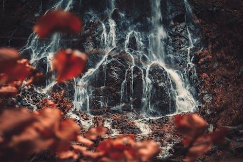 바위, 자연, 작은 폭포, 폭포의 무료 스톡 사진