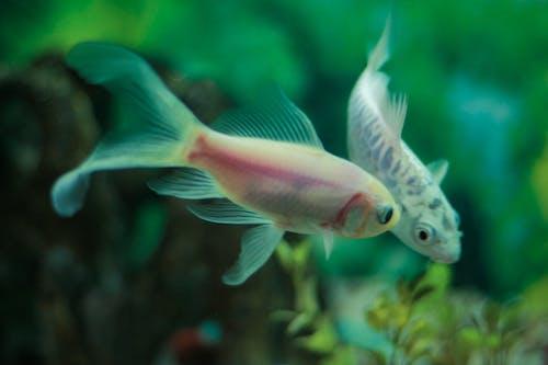 Imagine de stoc gratuită din pește