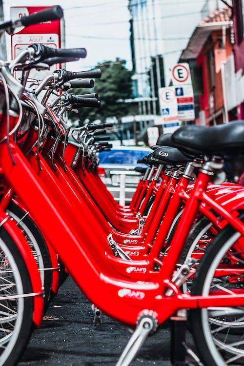 Foto profissional grátis de árvore, avermelhado, bicicleta, canal