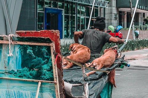 Foto profissional grátis de arte, cachorrinho, cachorro, cidade