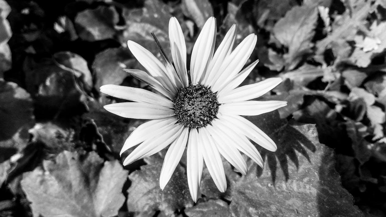 bnw, полевой цветок, природа
