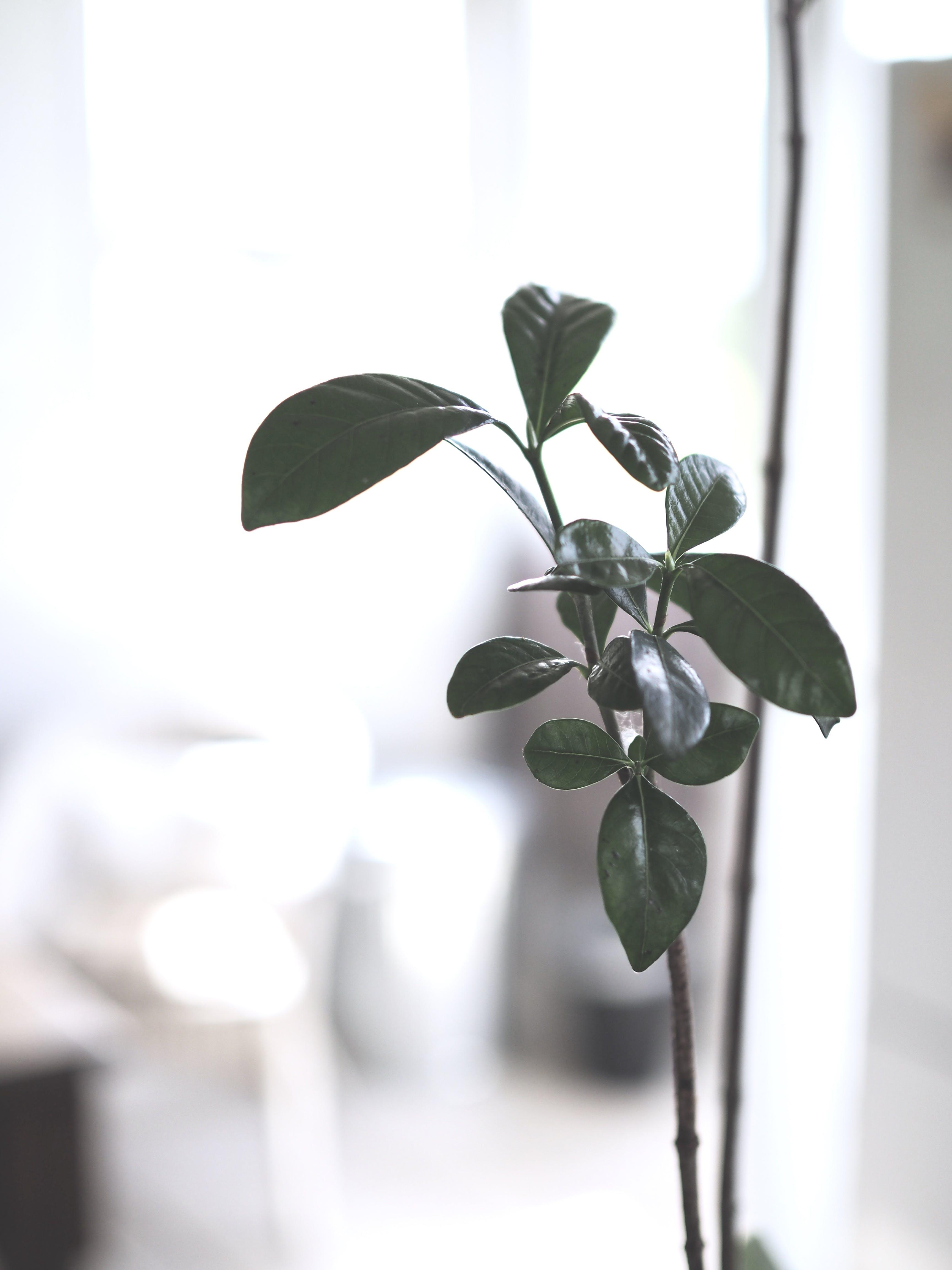 Kostnadsfri bild av friskhet, gren, grön, mognande