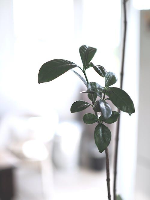 Ảnh lưu trữ miễn phí về cận cảnh, cây nhà, chi nhánh, màu xanh lá