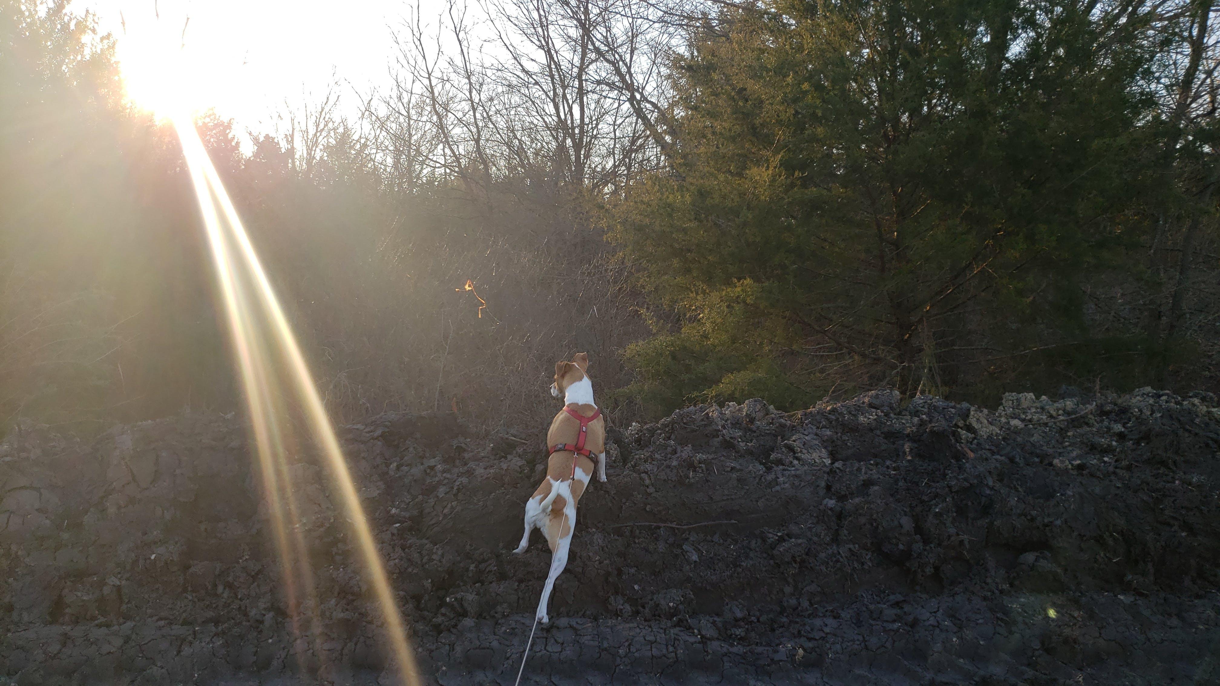 Kostenloses Stock Foto zu forscher, hund, köter, sonnenuntergang