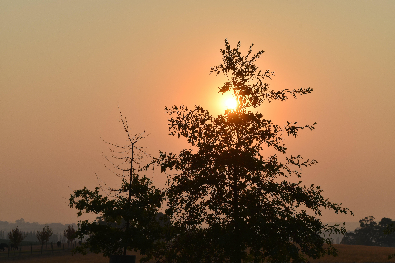 Free stock photo of ray of sunshine, sun, sunset, trees