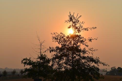 ağaçlar, gün batımı, Güneş, güneş ışını içeren Ücretsiz stok fotoğraf