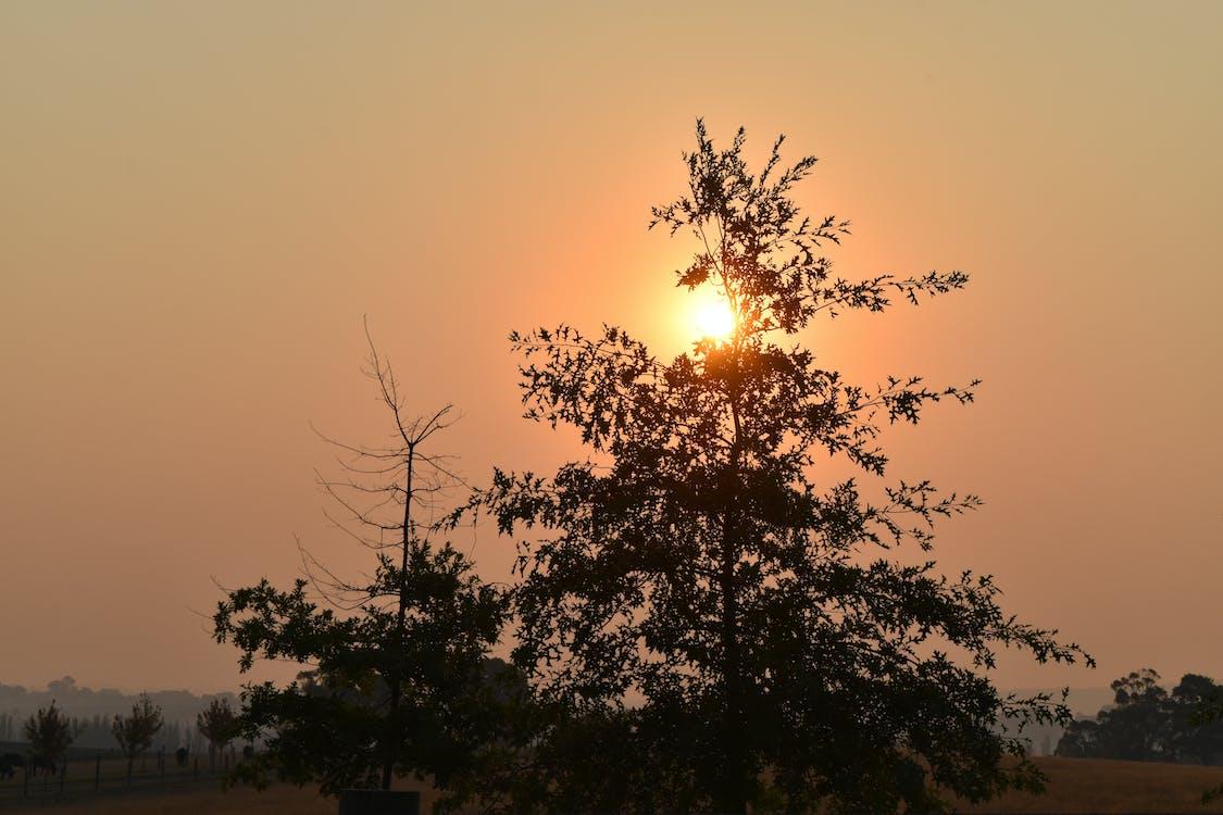 alberi, raggio di sole, sole