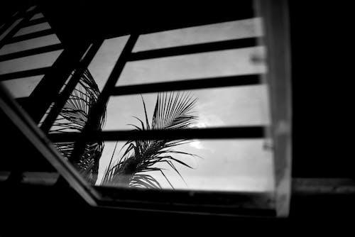 天空, 玻璃窗 的 免费素材照片