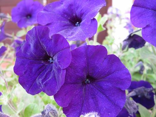 คลังภาพถ่ายฟรี ของ ดอกไม้, ดอกไม้สีม่วง, ต้นไม้, ธรรมชาติ