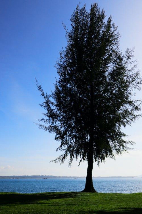 ağaç, Mavi gökyüzü, mavi okyanus, plaj içeren Ücretsiz stok fotoğraf