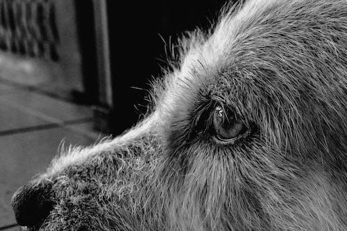 bir başına, Evcil Hayvanlar, gözler, köpek içeren Ücretsiz stok fotoğraf