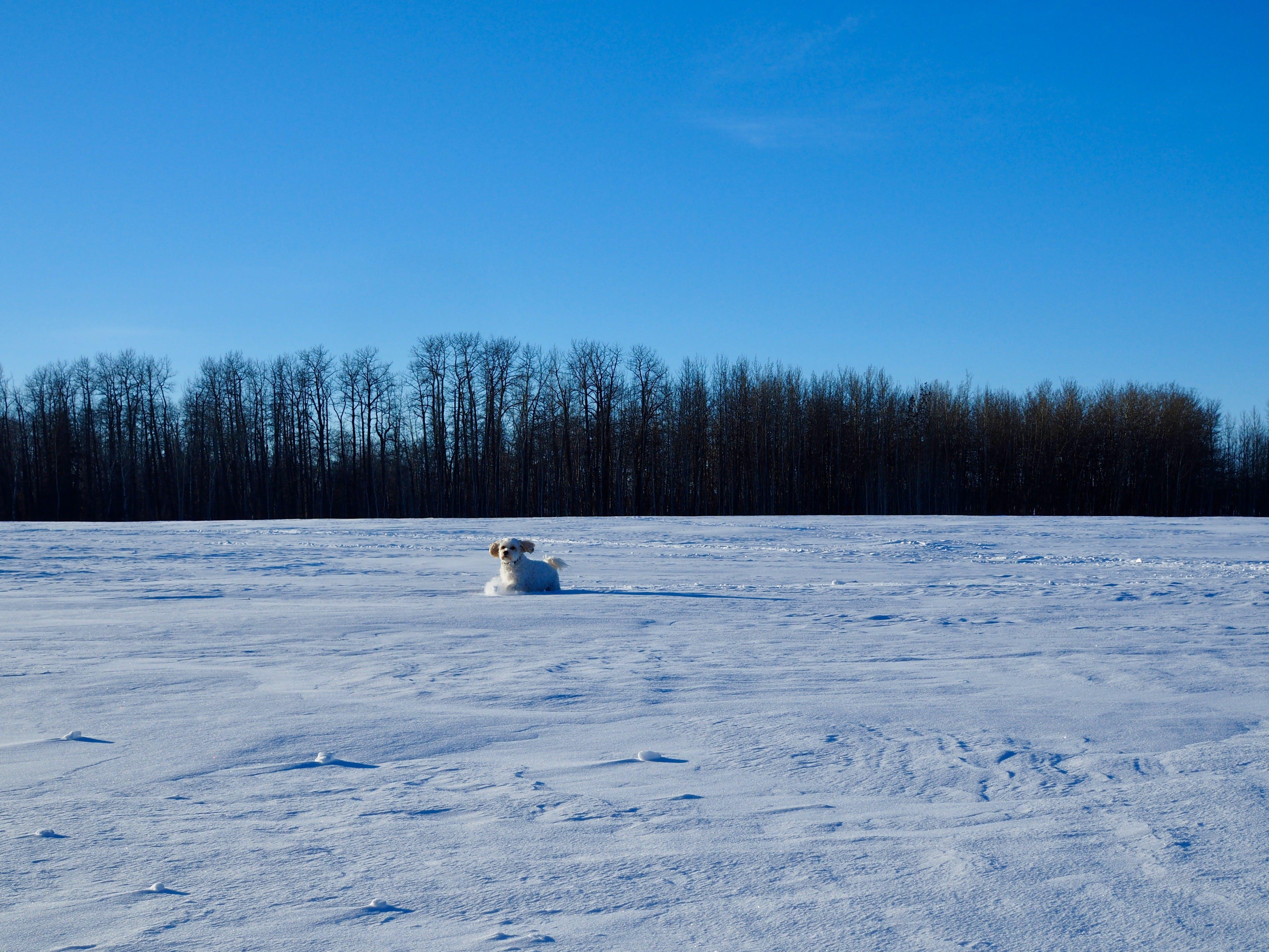 Free stock photo of Bijon, blue sky, snow, winter landscape