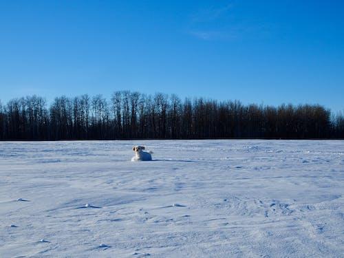 คลังภาพถ่ายฟรี ของ ท้องฟ้าสีคราม, ภูมิทัศน์ฤดูหนาว, หิมะ