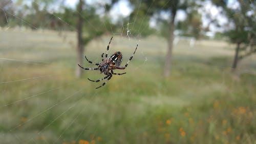 蜘蛛 的 免費圖庫相片