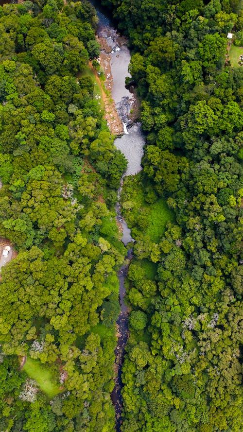 Photos gratuites de aérien, buisson, drone, forêt