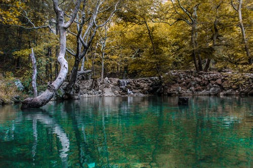 Free stock photo of #blog, #follow, #green, #nature