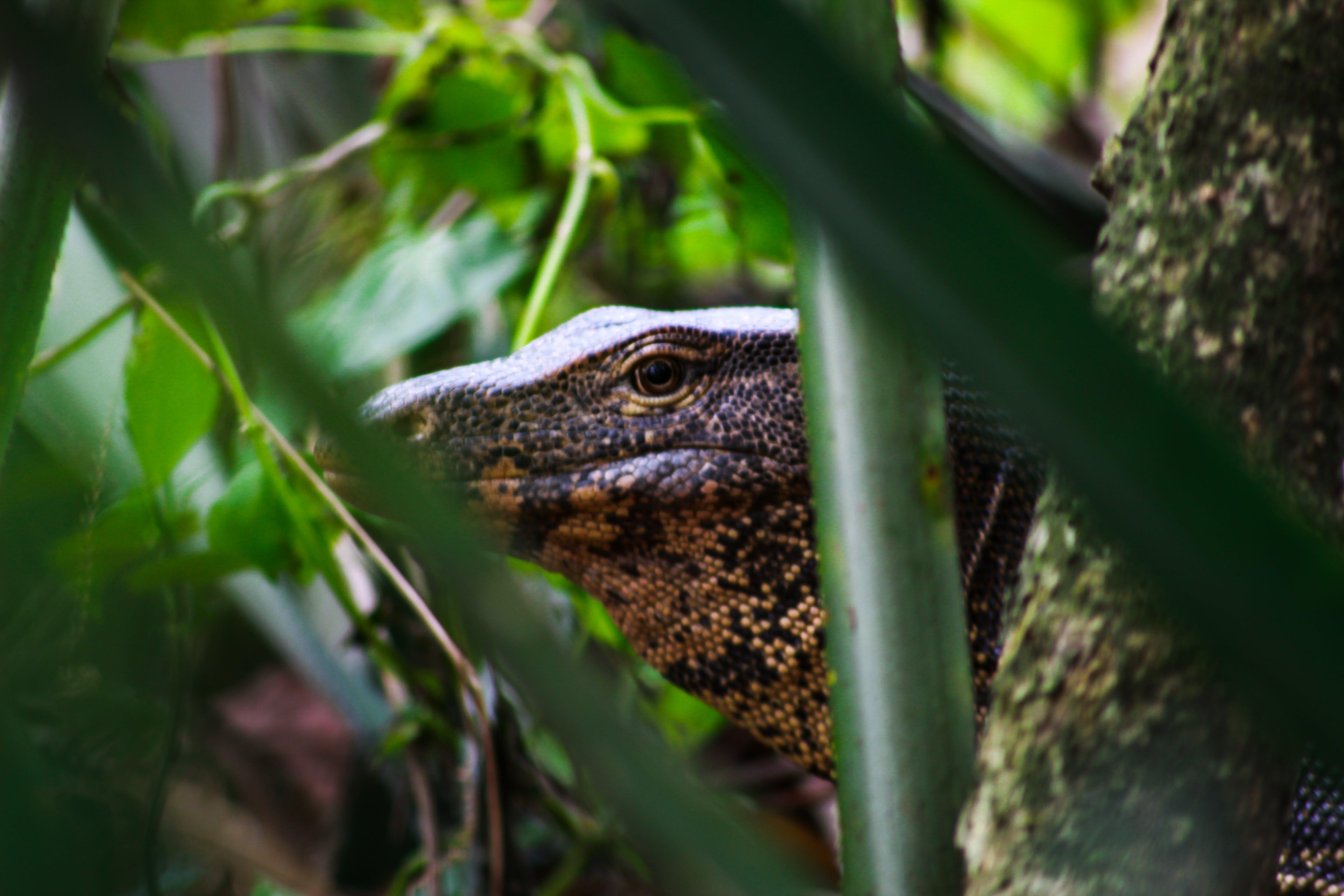 Foto profissional grátis de animal selvagem, dragão, fotografia da natureza, fotografia da vida selvagem
