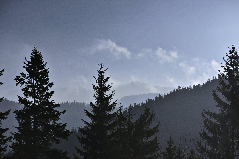 HD tapeta, hora, jehličnan