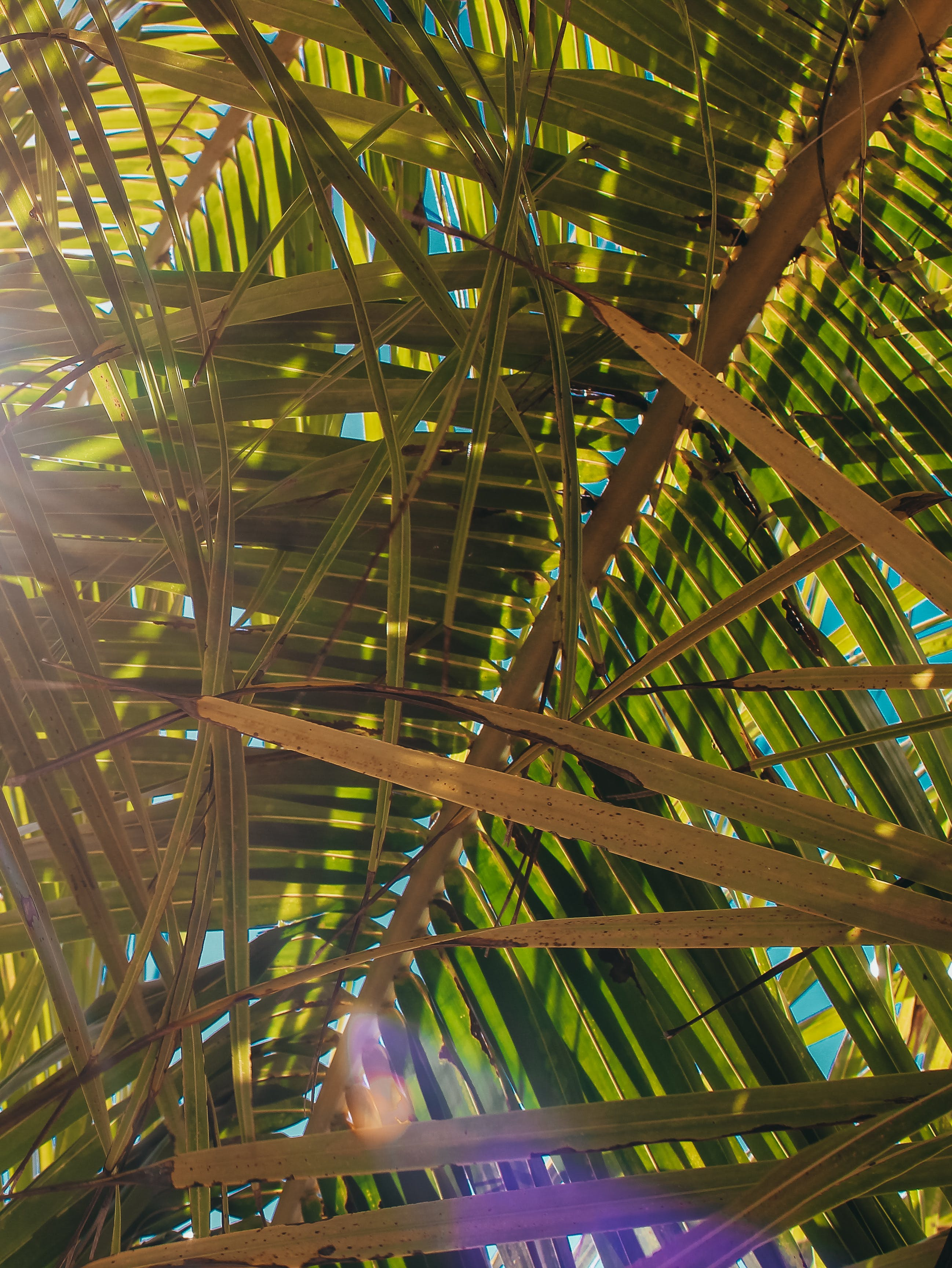 가벼운, 녹색, 디자인, 마른 잎의 무료 스톡 사진