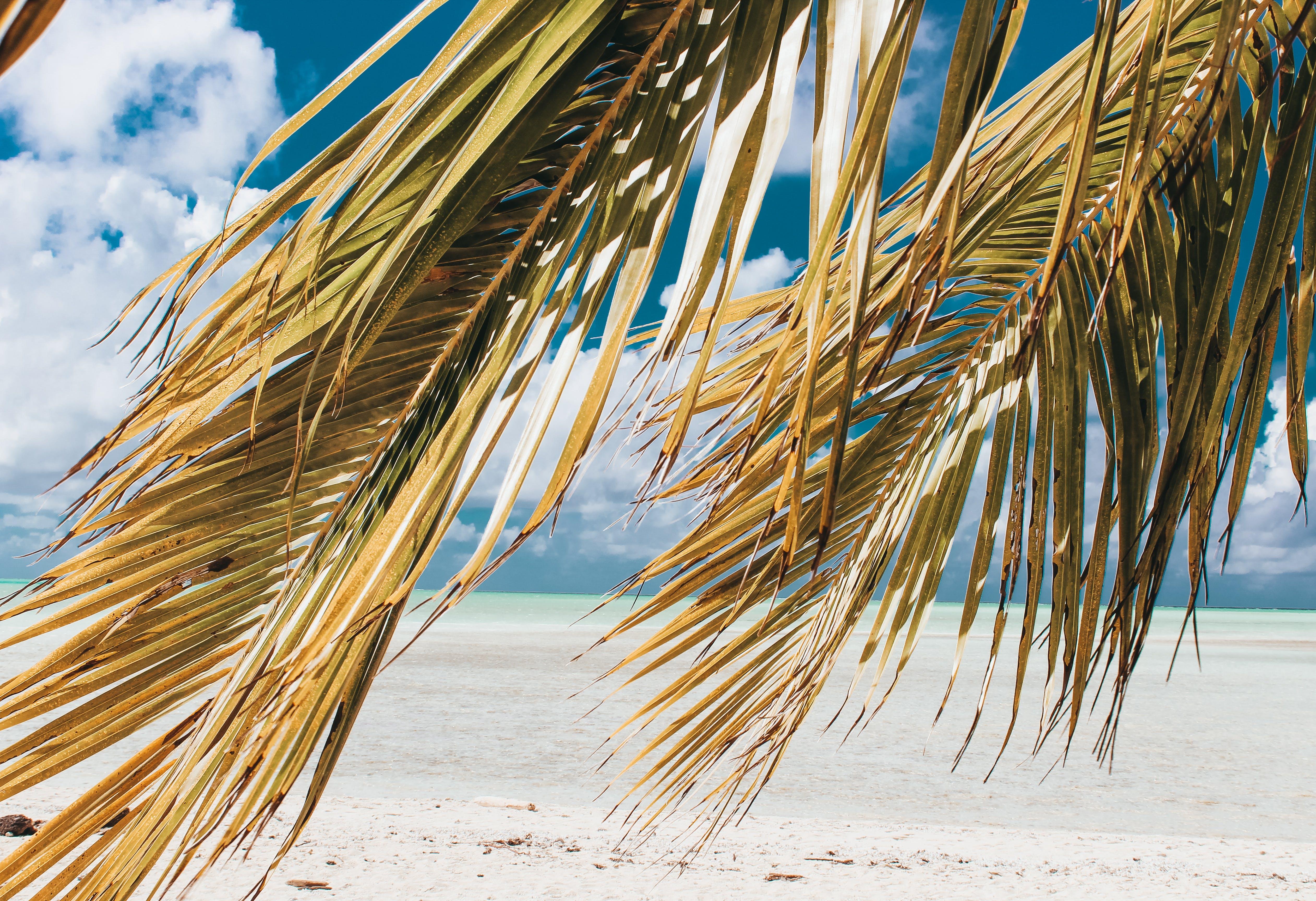 假期, 加勒比海, 土耳其藍, 夏天 的 免费素材照片