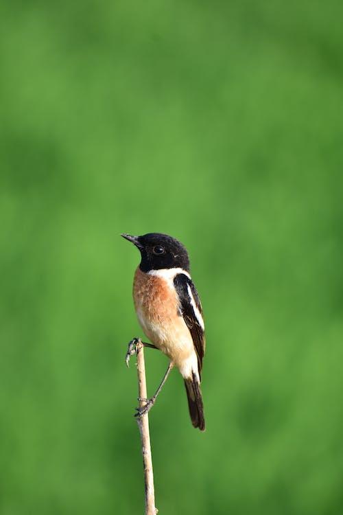 Foto stok gratis burung buas, hutan