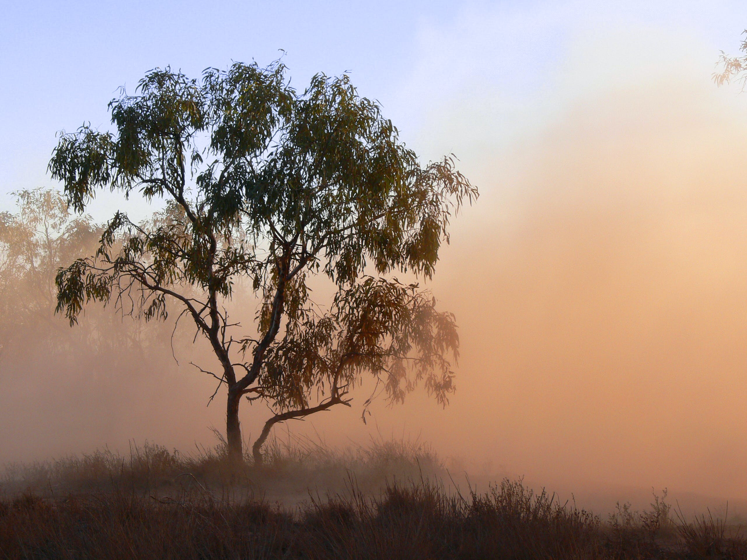 Free stock photo of dust, fog, foggy, tree