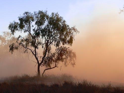 內陸, 有霧, 樹, 沼澤 的 免费素材照片