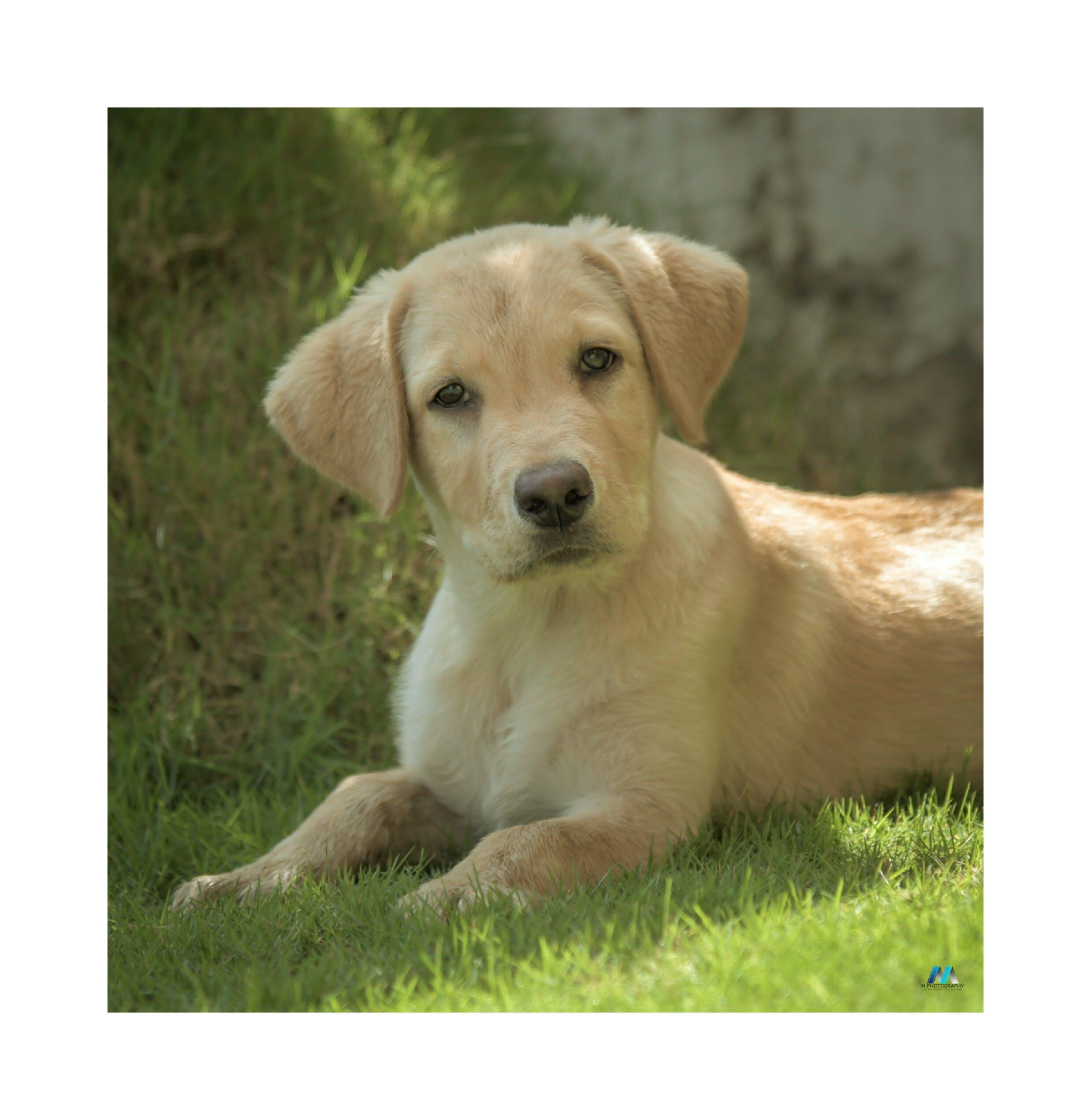 Free stock photo of baby dog, cute, cute animals, dark green