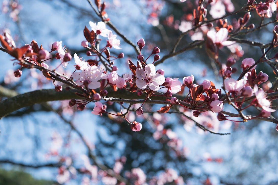 årstid, bakgrunnsbilde, blomst