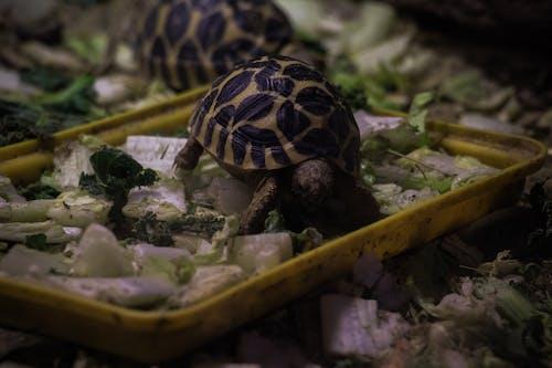 Fotobanka sbezplatnými fotkami na tému detská korytnačka, jedenie, ZOO