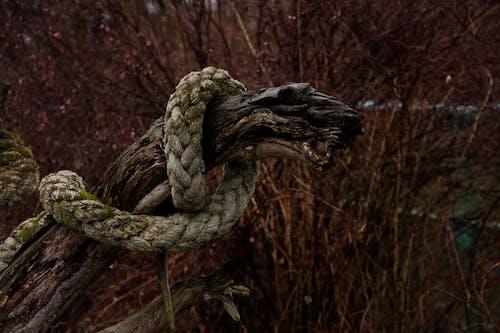 Fotobanka sbezplatnými fotkami na tému fotografia prírody, krása v prírode, les, matka príroda