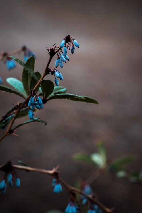 Fotobanka sbezplatnými fotkami na tému fotografia prírody, krása v prírode, kvet, matka príroda