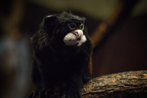 Fotobanka sbezplatnými fotkami na tému mláďa opice, sediaca opica, ZOO