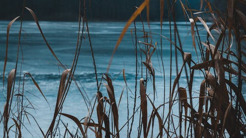 Fotos de stock gratuitas de césped, hielo, invierno, naturaleza
