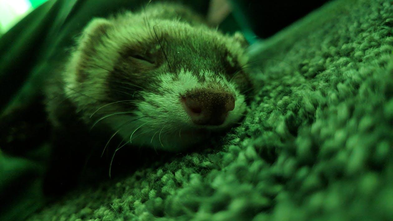 binatang, cute, fauna
