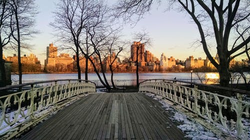 Darmowe zdjęcie z galerii z central park, chodzenie, drzewa, most