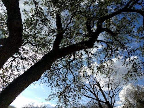 Darmowe zdjęcie z galerii z drzewa, natura, patrzenie w górę, piękno natury